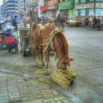 Изредка в Хэйхэ можно встретить лошадь