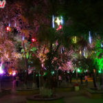 Ботанический сад в Хэйхэ ночью