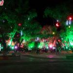 Ботанический сад ночью